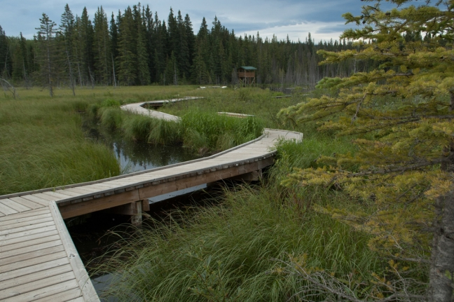 Beaver Boardwalk, Hinton, Alberta