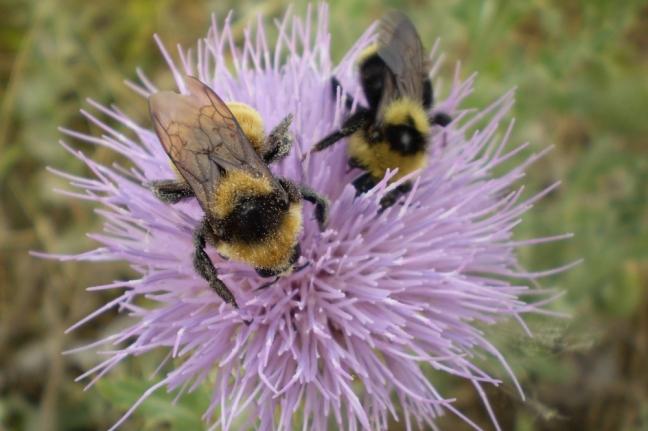 Bees, Alberta, Canada
