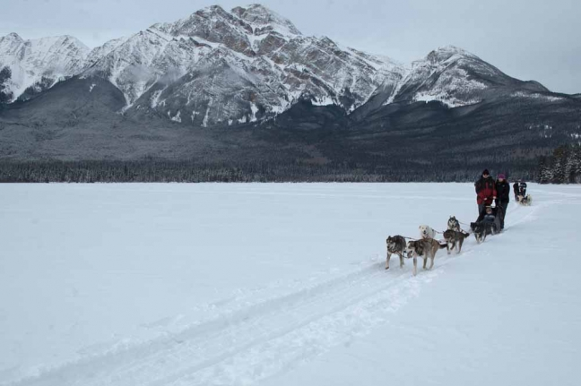Dogsledding, Jasper National Park, Alberta, Canada