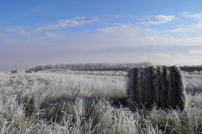 Hoar Frost, La Corey, Alberta, Canada
