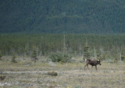 Yukon - Cariboo